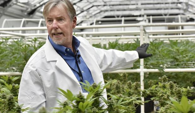 marijuana farming