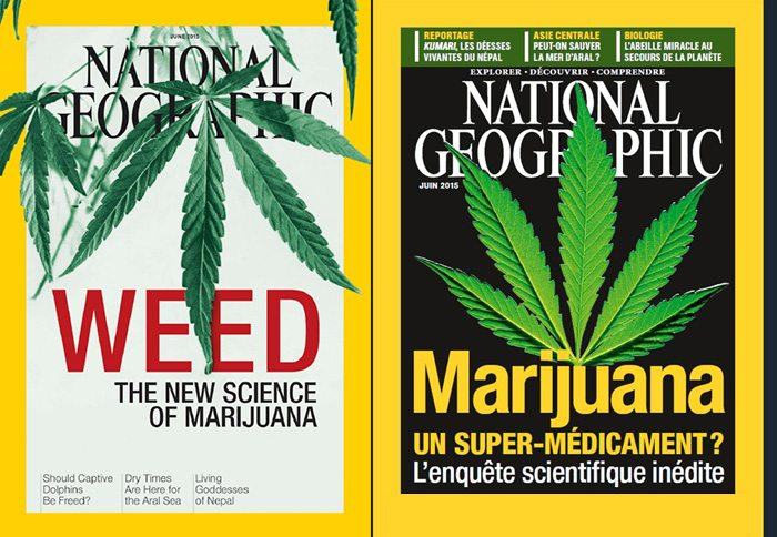 marijuana business magazines