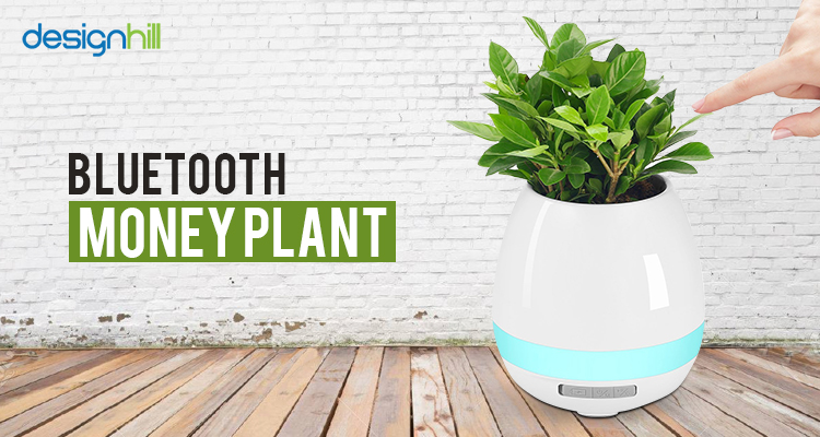 Bluetooth Money Plant
