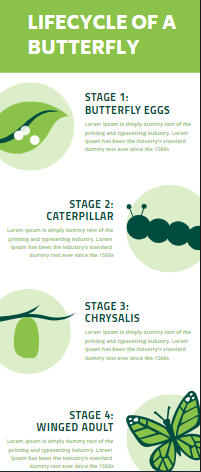 Butterfly Infographic Design