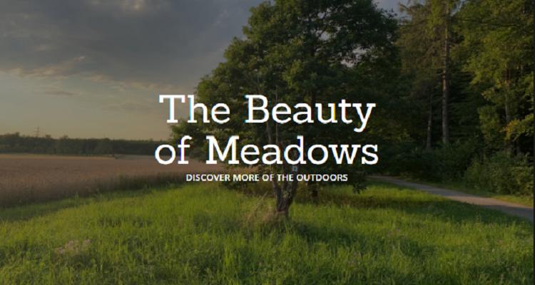 Beauty Of Meadows